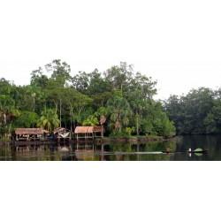 Soin Amazonie Rituel 1